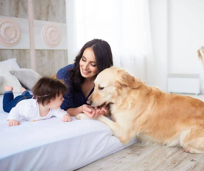 Featured image of mother and baby on bed with dog
