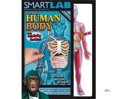 Product image of Smart Lab You Explore It Human Body Model