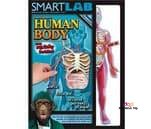 Small product image of Smart Lab You Explore It Human Body Model