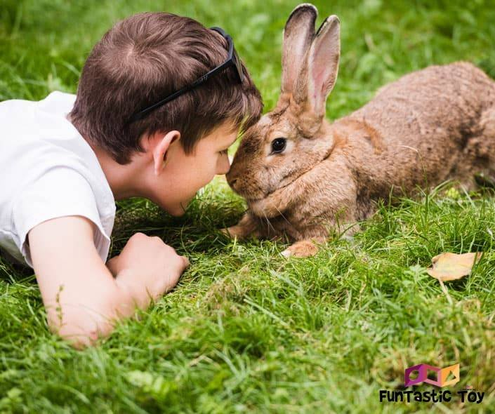 Image of boy laying on grass with rabbit